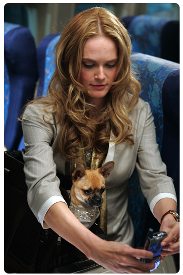 Rachel Blanchard using Treo in Snakes on a Plane
